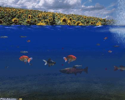 Pond aquarium 3d screen saver fish screensaver pc new ebay for Koi pond screensaver